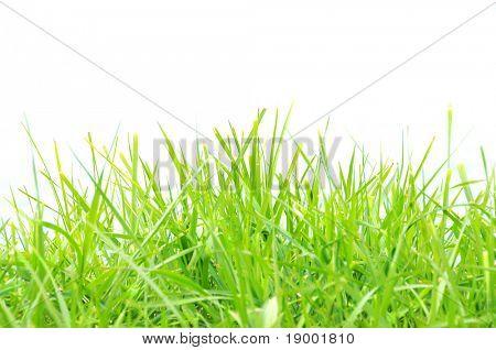 Grassy/summer background