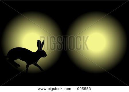 Headlight Rabbit