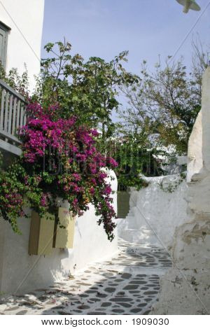 Flowers Greece1