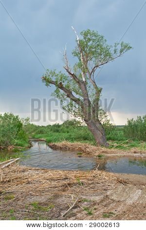 Old Tree At The River Before A Thunder-storm