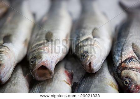 Fresh fish on fishmarket (shallow depth of field, focus on lower half)