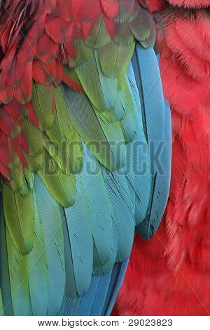 Detail of a macaw wing feathers