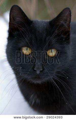 Gato negro en la nieve