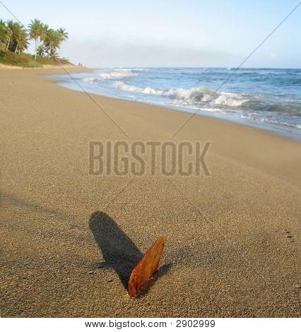 Leaf In Sand At Beach