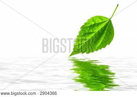 Green Leaf Reflecting In Water