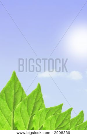 Green Leaves, Sky And Sun