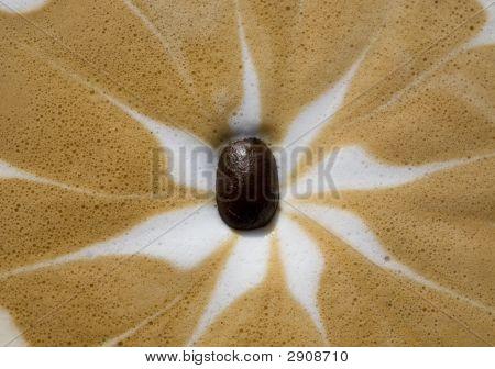 Coffee Bean In Latte