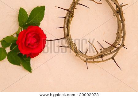 Crown Of Thorns And Red Rose