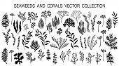 Seaweeds And Coral Reef Underwater Plans Vector Collection. Aquarium, Ocean And Marine Algae Water P poster