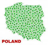 Vector Cannabis Poland Map Collage. Concept With Green Weed Leaves For Weed Legalize Campaign. Vecto poster