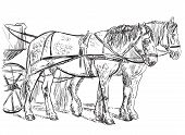 Vector Hand Drawing Illustration Horses Standing In Profile. Monochrome Vector Hand Drawing Sketch I poster