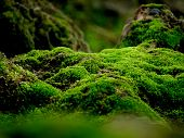 Beautiful Green Moss On The Floor, Moss Closeup, Macro. Beautiful Background Of Moss For Wallpaper. poster