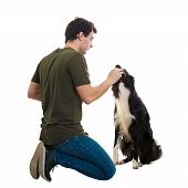 Well Trained Border Collie Eating From His Master Hands. Young Man Owner Sitting Down On Knees Feedi poster
