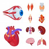 Vector Design Of Anatomy And Organ Icon. Set Of Anatomy And Medical Stock Symbol For Web. poster