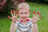 Child Put Fingers Raspberries. Kids Pick Fresh Fruit Organic Raspberries Farm. Children Gardening Ha poster