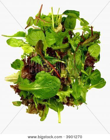 Isolated Mixed Salad