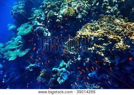 Group of coral fish  in blue water. Diving.
