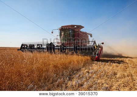 Red combine harvester working a flax field