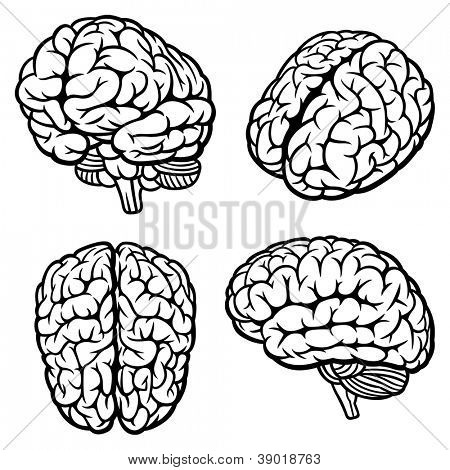 Human Brain. Set of four views. Rasterized version