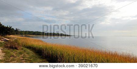 Carolina Shore