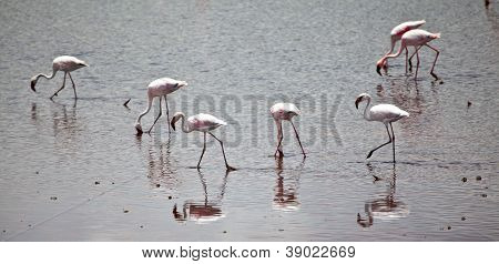 Flamingos On The Lake