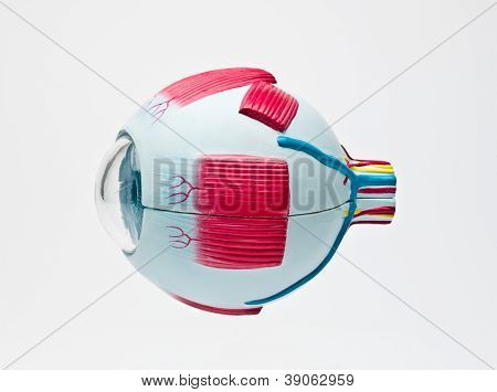 human eyeball tool