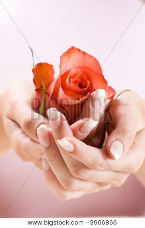 Beautiful Hands With Rose