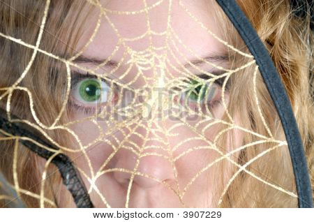 Scared Look Through Spider\'S Web
