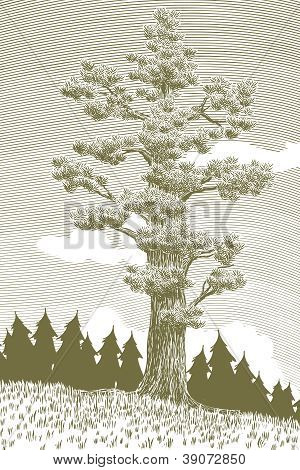 Woodcut Giant Cedar Tree