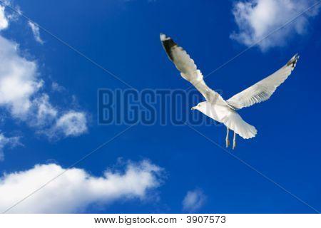Seagull Himmel