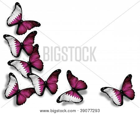 Qatari Flag Butterflies, Isolated On White Background