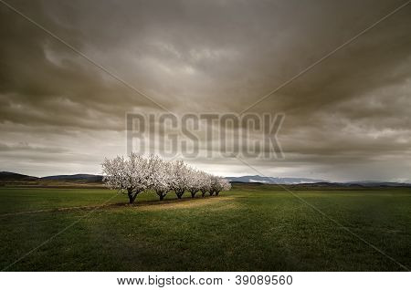 Almonds Under The Storm