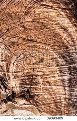 Cut Wood Texture Surface