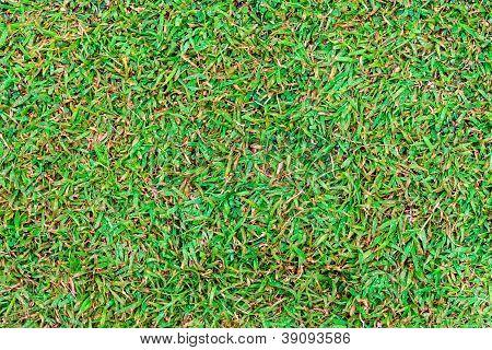 Wet Green Grass Field Surface