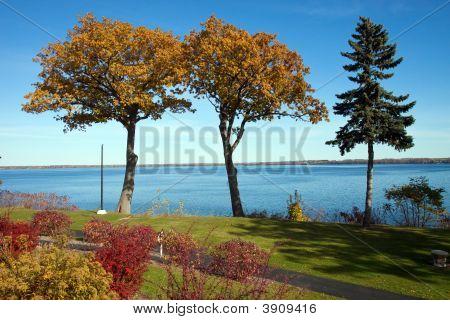 Tall Fall Trees