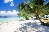 Coconut palm at perfect tropical beach in Malaysia