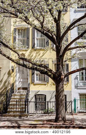 Chelsea Townhouse Spring Morning, New York City