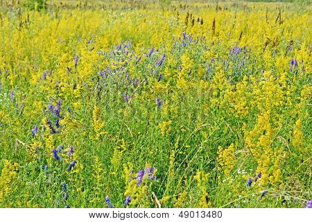 Meadow Grass Diversity, Summer Nature