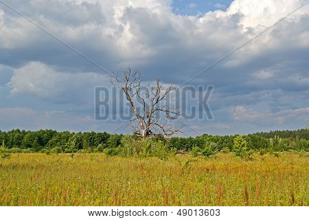 Vintage Tree In The Meadow Before Thunderstorm, Blue Sky With White Clouds, Travel