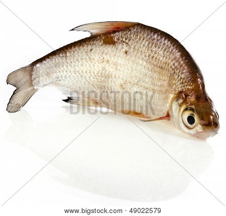 Fresh bream fish isolated on a white background