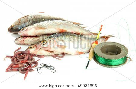 Fishes and fishing tools isolated on white