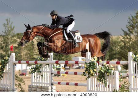 Equestrian Grand Prix - Susan Artes Presto B