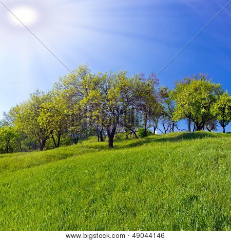 Field Of Grass Green Background