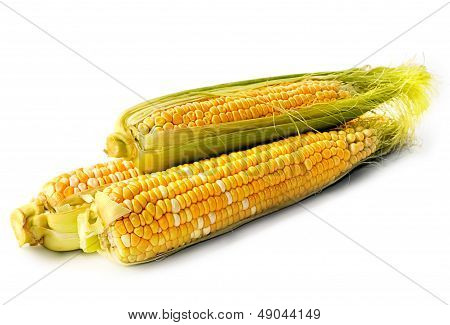 Cob Corn Isolated
