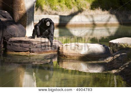 Monkey Stones
