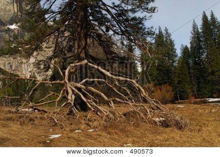 Dead Tree Branch