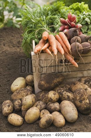 Fresh vegetables in crate