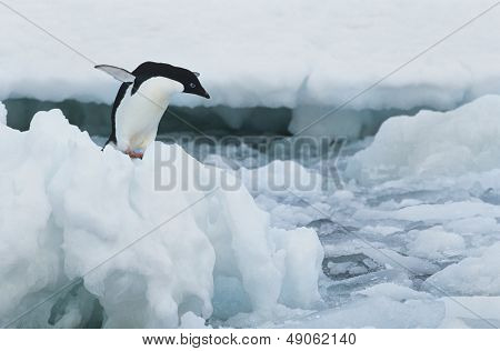 Penguin on iceberg