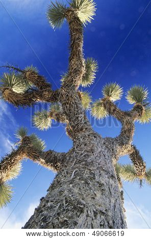 Prickly tree low angle view