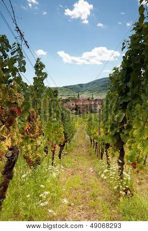 Durch die Weinberge entlang der berühmten Weinstraße im Elsass Rebe Zeilen anzeigen